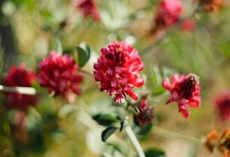 vortex su fiori di sulla